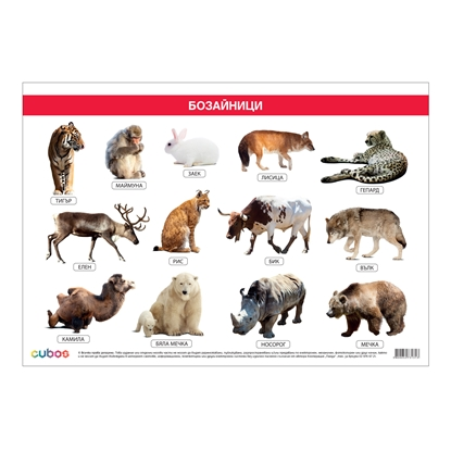 Picture of Student chart, mammals, 70 x 100 cm