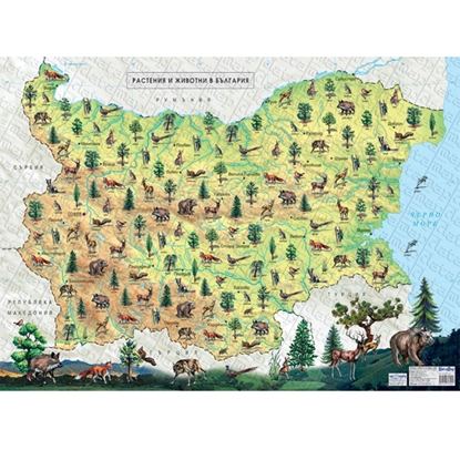 Picture of Chart Plants and animals in Bulgaria and in the World, laminated